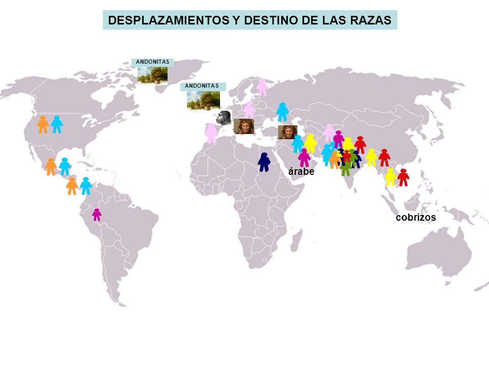 cobrizos árabe ANDONITAS DESPLAZAMIENTOS Y DESTINO DE LAS RAZAS