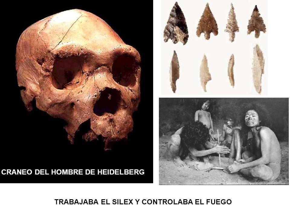 CRANEO DEL HOMBRE DE HEIDELBERG TRABAJABA EL SILEX Y CONTROLABA EL FUEGO