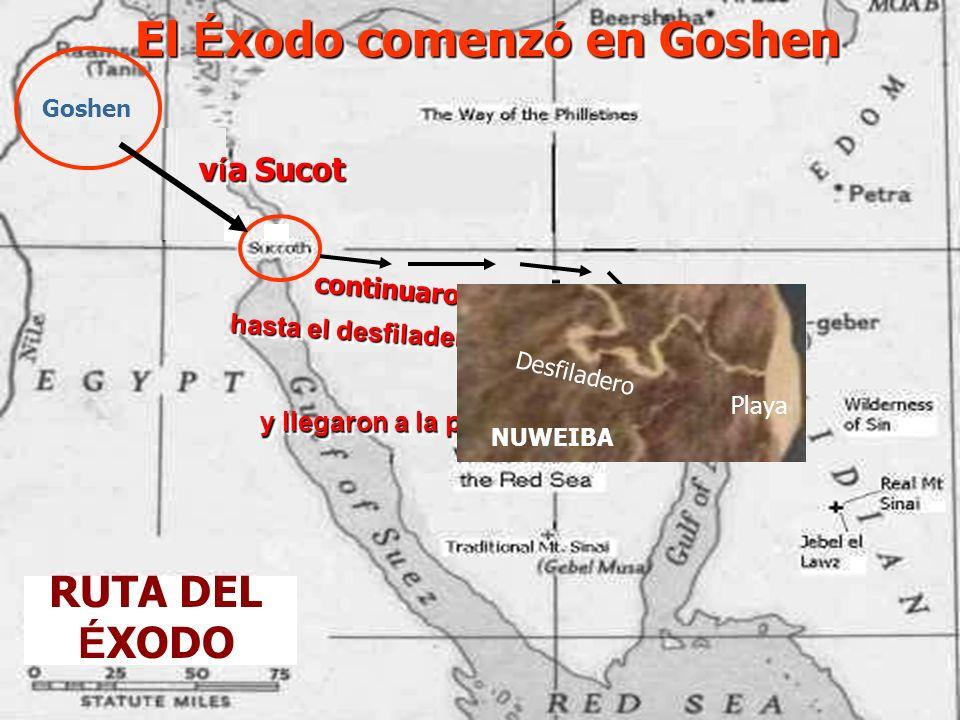 RUTA DEL É XODO El É xodo comenz ó en Goshen v í a Sucot y llegaron a la playa de Nuweiba y llegaron a la playa de Nuweiba Goshen c o n t i n u a r o n v a d e a n d o hasta el desfiladero Nuweiba h a s t a e l d e s f i l a d e r o N u w e i b a Desfiladero Playa NUWEIBA