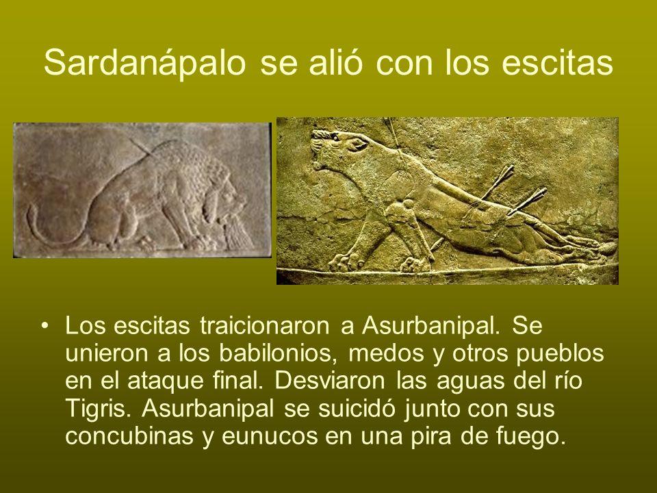 Sardanápalo se alió con los escitas Los escitas traicionaron a Asurbanipal. Se unieron a los babilonios, medos y otros pueblos en el ataque final. Des