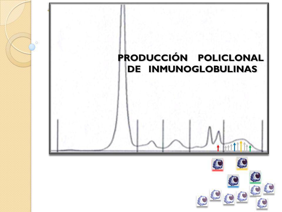 GAMMAPATÍASMONOCLONALES(GM) Componente Monoclonal (CM) ó Paraproteína ¿ MALIGNAS (GMM) SIGNIFICADO INCIERTO GMSI (MGUS) ?