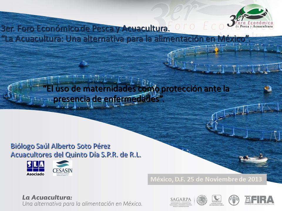 3er. Foro Económico de Pesca y Acuacultura. La Acuacultura: Una alternativa para la alimentacìón en México. El uso de maternidades como protección ant
