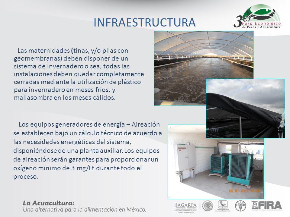 INFRAESTRUCTURA Las maternidades (tinas, y/o pilas con geomembranas) deben disponer de un sistema de invernadero o sea, todas las instalaciones deben