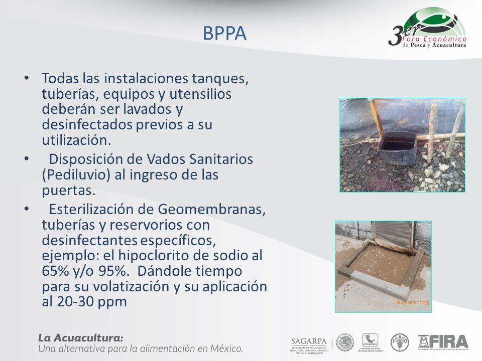 BPPA Todas las instalaciones tanques, tuberías, equipos y utensilios deberán ser lavados y desinfectados previos a su utilización. Disposición de Vado