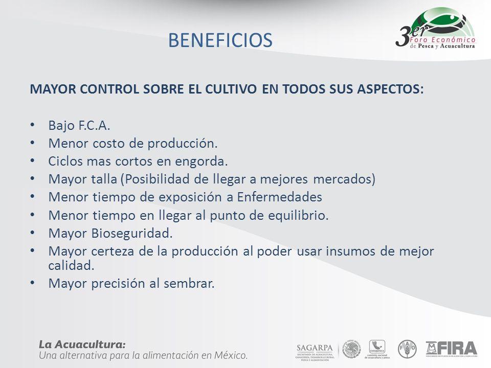 BENEFICIOS MAYOR CONTROL SOBRE EL CULTIVO EN TODOS SUS ASPECTOS: Bajo F.C.A. Menor costo de producción. Ciclos mas cortos en engorda. Mayor talla (Pos