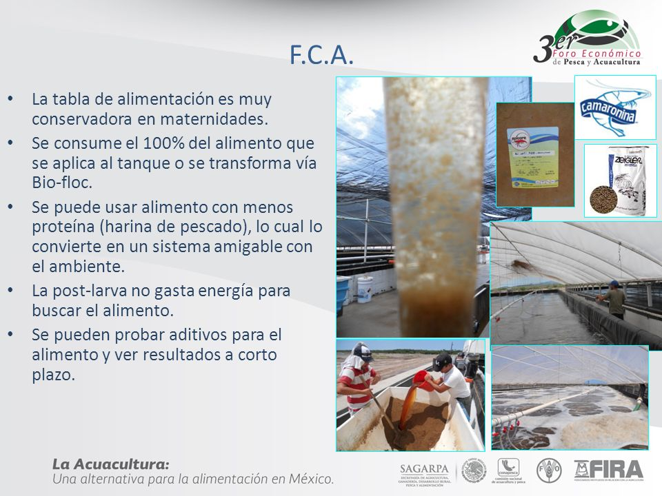 F.C.A. La tabla de alimentación es muy conservadora en maternidades. Se consume el 100% del alimento que se aplica al tanque o se transforma vía Bio-f