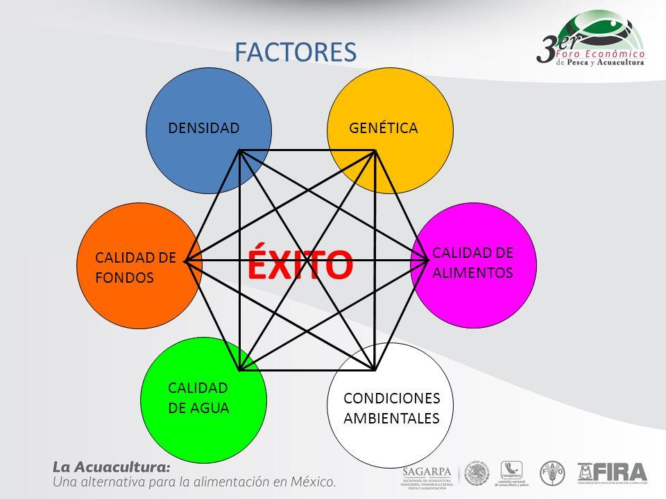 FACTORES DENSIDAD CALIDAD DE FONDOS CALIDAD DE AGUA CALIDAD DE ALIMENTOS GENÉTICA CONDICIONES AMBIENTALES ÉXITO