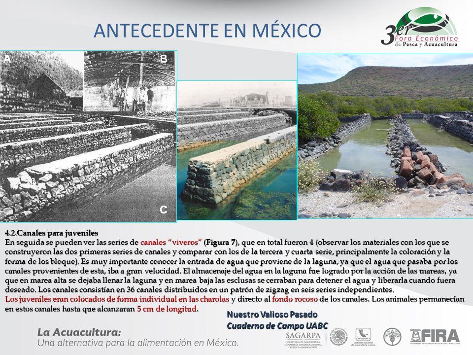 ANTECEDENTE EN MÉXICO 4.2. Canales para juveniles 4.2. Canales para juveniles En seguida se pueden ver las series de canales viveros ( Figura 7 ), que