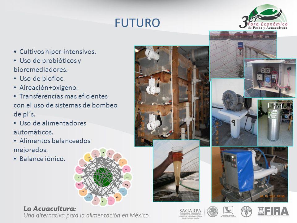 FUTURO Cultivos hiper-intensivos. Uso de probióticos y bioremediadores. Uso de biofloc. Aireación+oxigeno. Transferencias mas eficientes con el uso de
