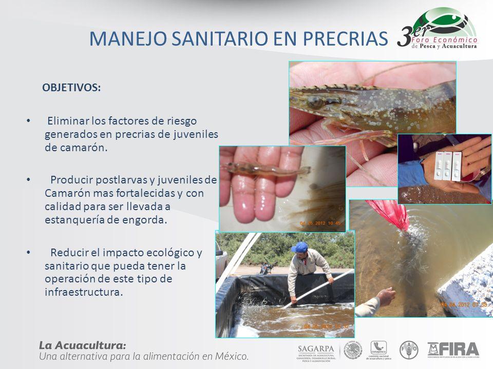 MANEJO SANITARIO EN PRECRIAS OBJETIVOS: Eliminar los factores de riesgo generados en precrias de juveniles de camarón. Producir postlarvas y juveniles