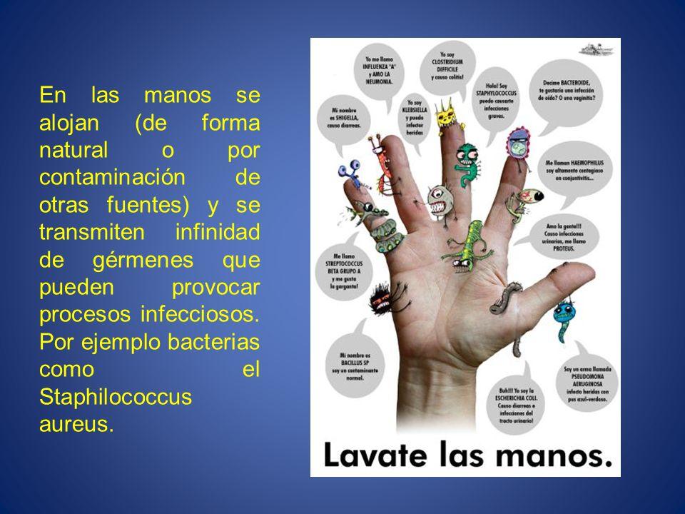 En las manos se alojan (de forma natural o por contaminación de otras fuentes) y se transmiten infinidad de gérmenes que pueden provocar procesos infe