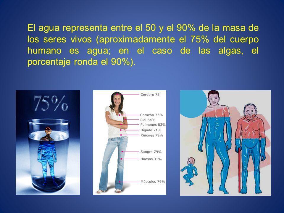 El agua representa entre el 50 y el 90% de la masa de los seres vivos (aproximadamente el 75% del cuerpo humano es agua; en el caso de las algas, el p