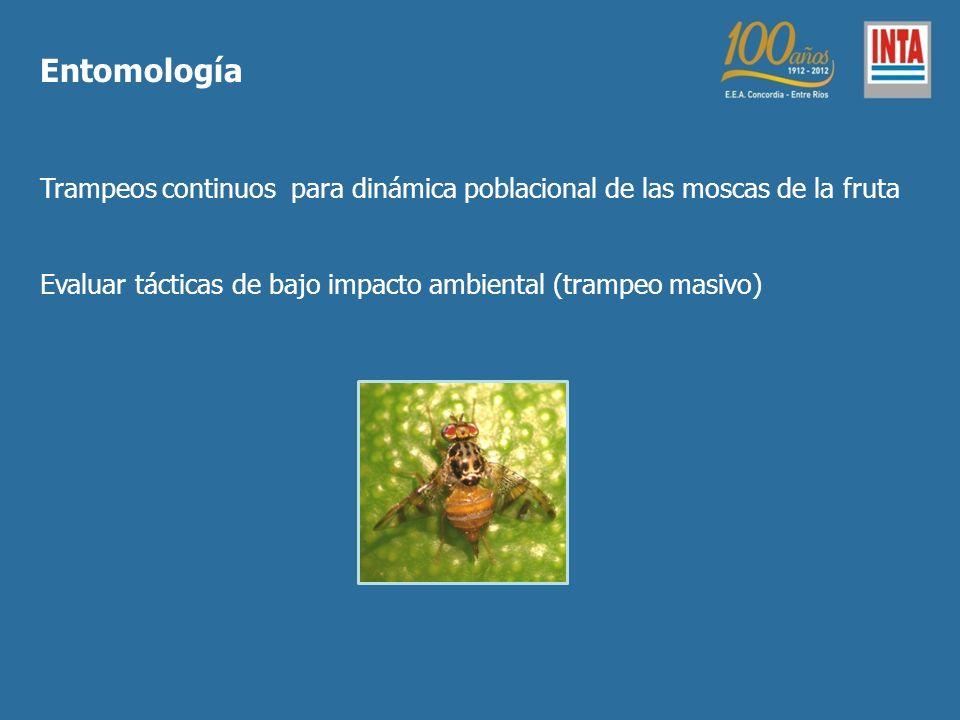 Trampeos continuos para dinámica poblacional de las moscas de la fruta Evaluar tácticas de bajo impacto ambiental (trampeo masivo) Entomología