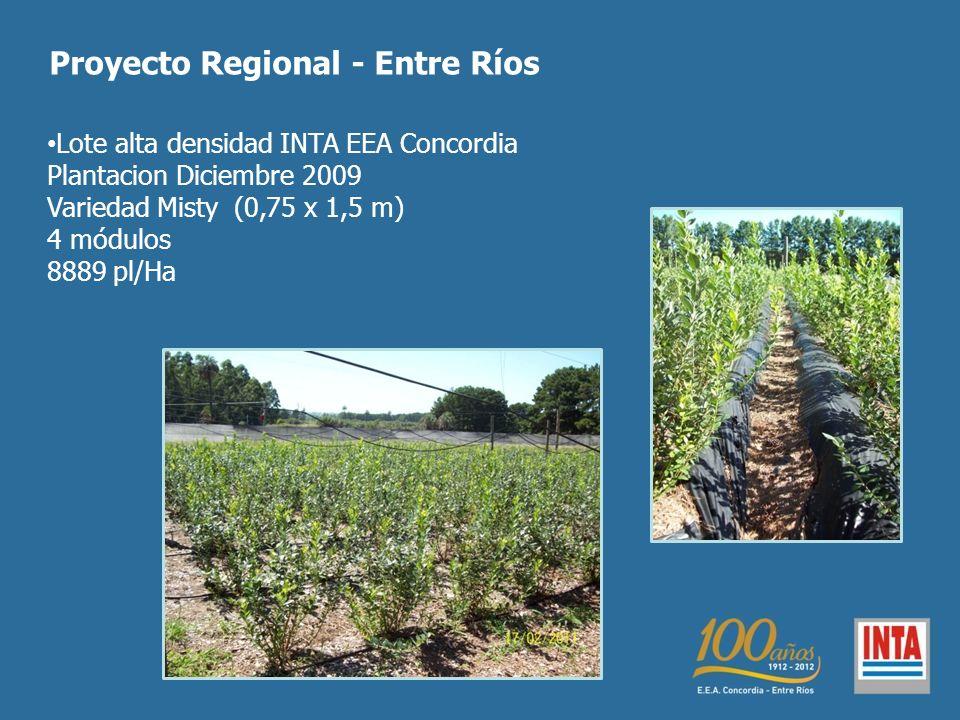 Lote alta densidad INTA EEA Concordia Plantacion Diciembre 2009 Variedad Misty (0,75 x 1,5 m) 4 módulos 8889 pl/Ha Proyecto Regional - Entre Ríos