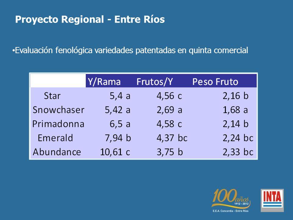 Evaluación fenológica variedades patentadas en quinta comercial
