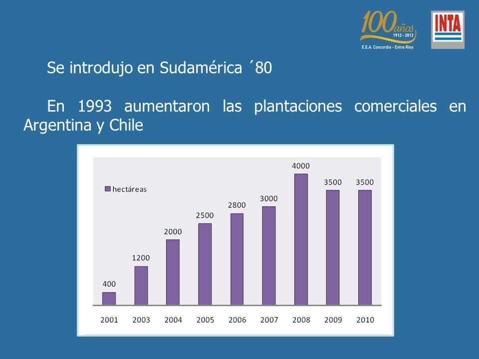 Se introdujo en Sudamérica ´80 En 1993 aumentaron las plantaciones comerciales en Argentina y Chile