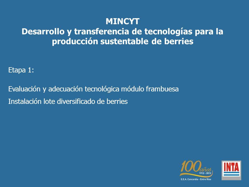 MINCYT Desarrollo y transferencia de tecnologías para la producción sustentable de berries Etapa 1: Evaluación y adecuación tecnológica módulo frambuesa Instalación lote diversificado de berries