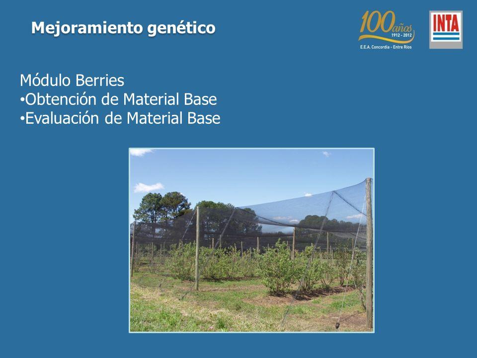 Módulo Berries Obtención de Material Base Evaluación de Material Base Mejoramiento genético