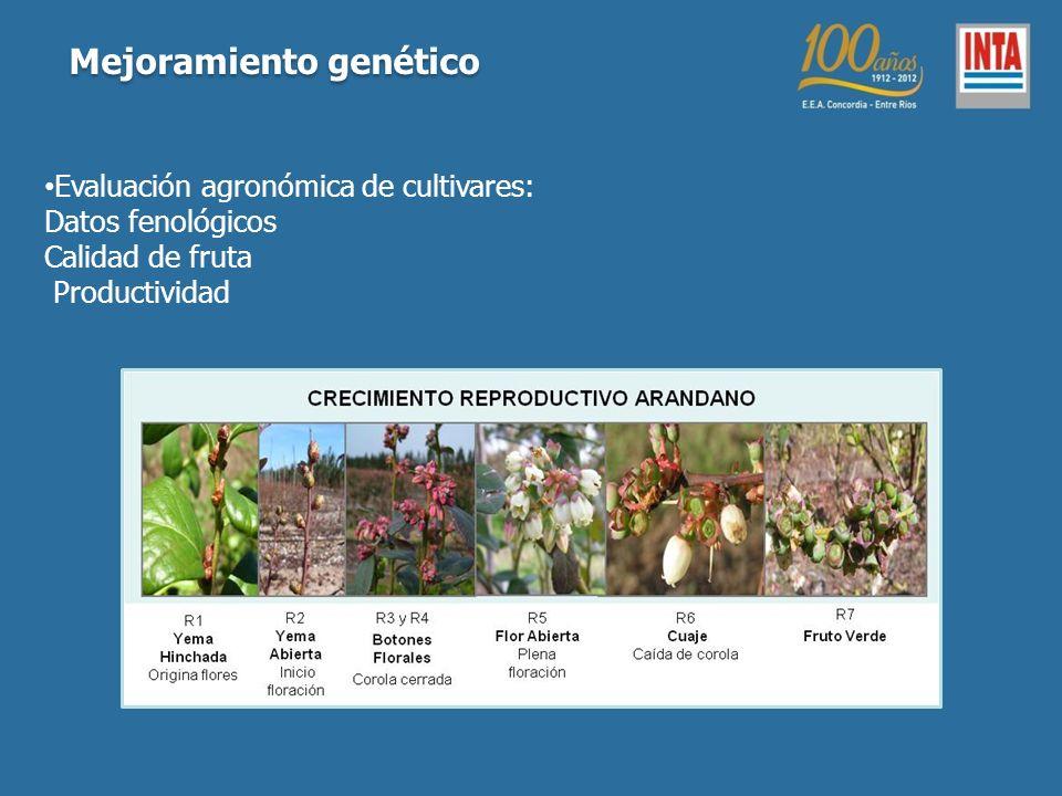 Evaluación agronómica de cultivares: Datos fenológicos Calidad de fruta Productividad Mejoramiento genético