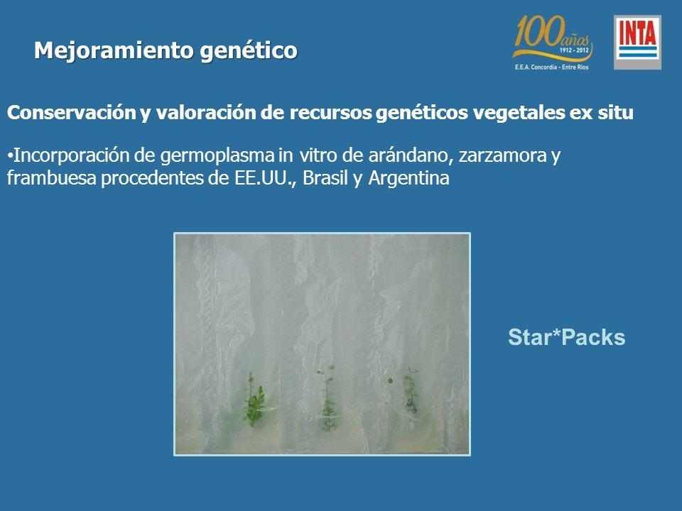 Conservación y valoración de recursos genéticos vegetales ex situ Incorporación de germoplasma in vitro de arándano, zarzamora y frambuesa procedentes de EE.UU., Brasil y Argentina Mejoramiento genético Star*Packs