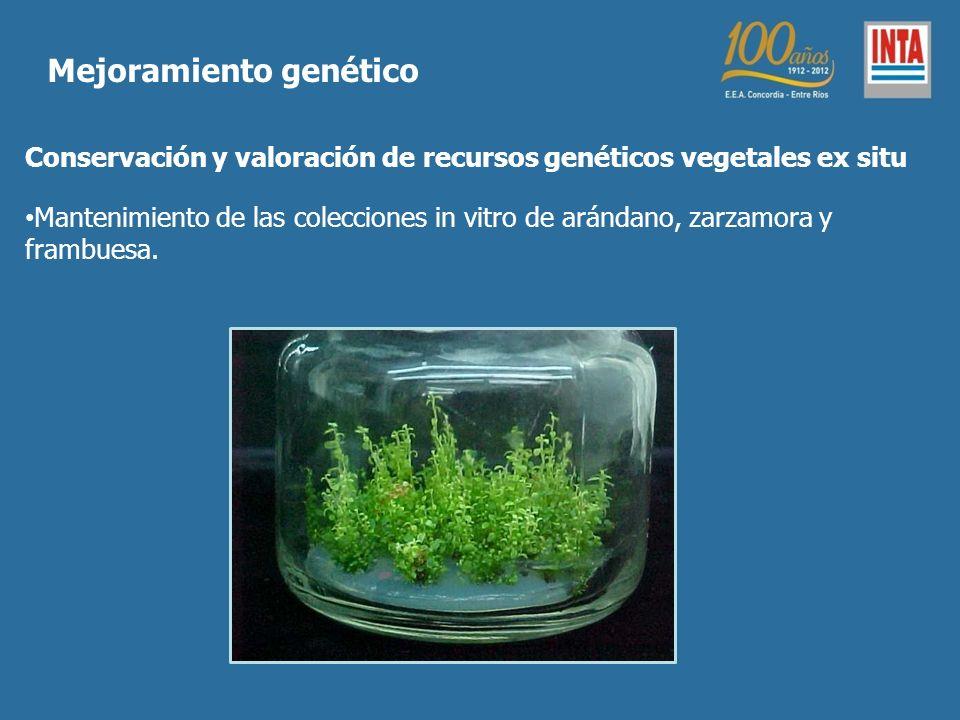 Conservación y valoración de recursos genéticos vegetales ex situ Mantenimiento de las colecciones in vitro de arándano, zarzamora y frambuesa. Mejora