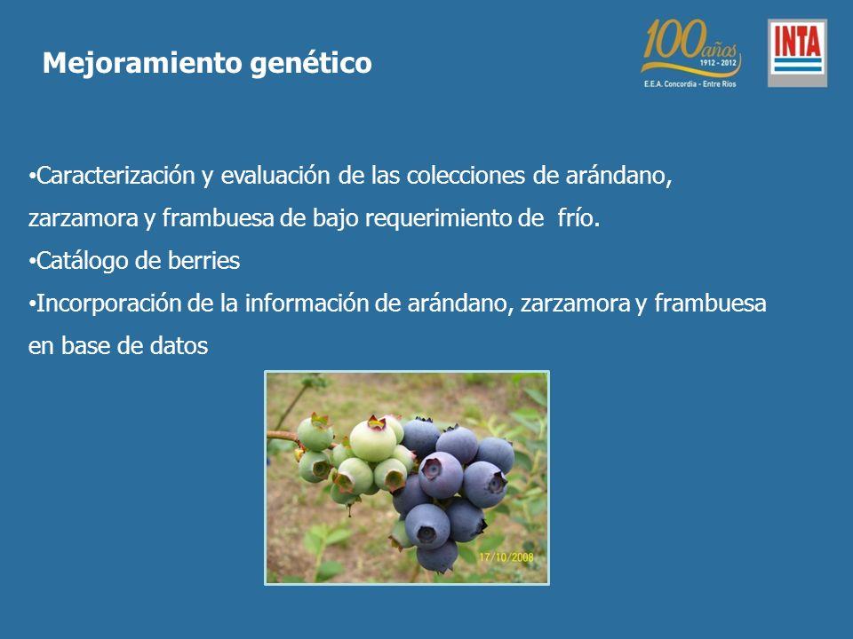 Caracterización y evaluación de las colecciones de arándano, zarzamora y frambuesa de bajo requerimiento de frío.