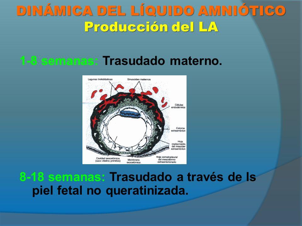 VALORACIÓN ECOGRÁFICA DEL LA 2-8 cm 8-24 Ambas estimaciones pueden verse alteradas por factores como la presión realizada sobre el abdomen materno o los movimientos fetales.