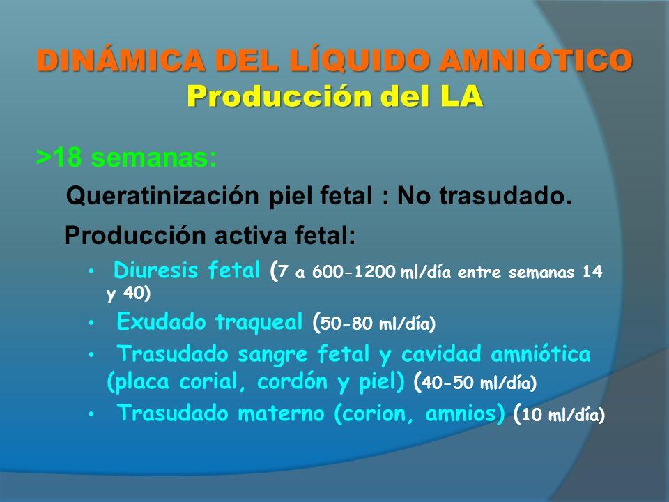 1-8 semanas: Trasudado materno 8-18 semanas: Trasudado fetal >18 semanas: Eliminación activa fetal: Deglución fetal (>20 ml/ hora 500-1000 ml/día) Otros: Trasudación por aparato respiratorio y piel.