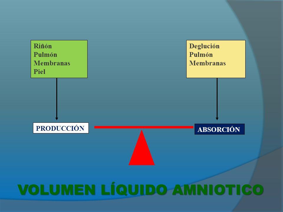 ORINA A partir de sem 20 (600-1200 ml/día) SECRECIONES TRAQUEALES (60-100 ml/kg/día) INTERCAMBIO EXTRAMEMBRANOSO (10 ml/día) DEGLUCIÓN FETAL (200-1500 ml/día) INTERCAMBIO INTRAMEMBRANOSO (unos 1000 ml/día) Recambio: Hasta 3 veces en 24 horas Volumen aumenta desde 10 ml a las 9 semanas hasta 800 ml a las 32 semanas