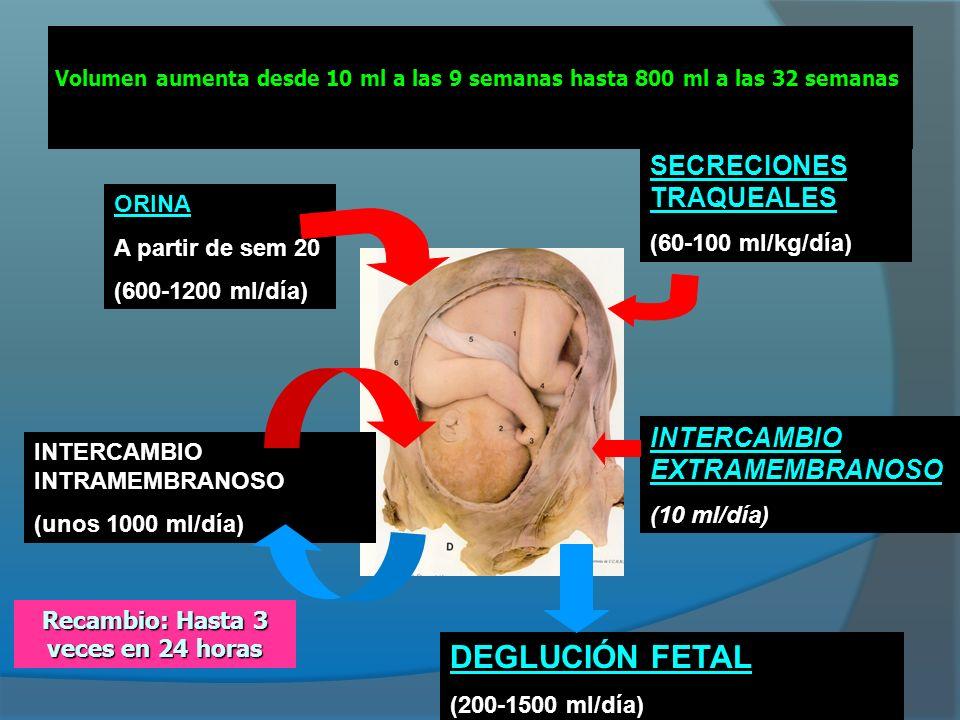 VOLUMEN DE LÍQUIDO AMNIÓTICO a) Movimiento de agua (centrífugo) y solutos (centrípeto) en el interior y a través de las membranas.