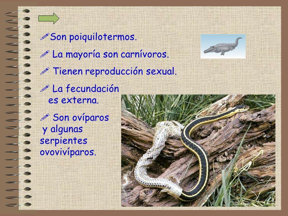 !Son poiquilotermos. ! La mayoría son carnívoros. ! Tienen reproducción sexual. ! La fecundación es externa. ! Son ovíparos y algunas serpientes ovovi