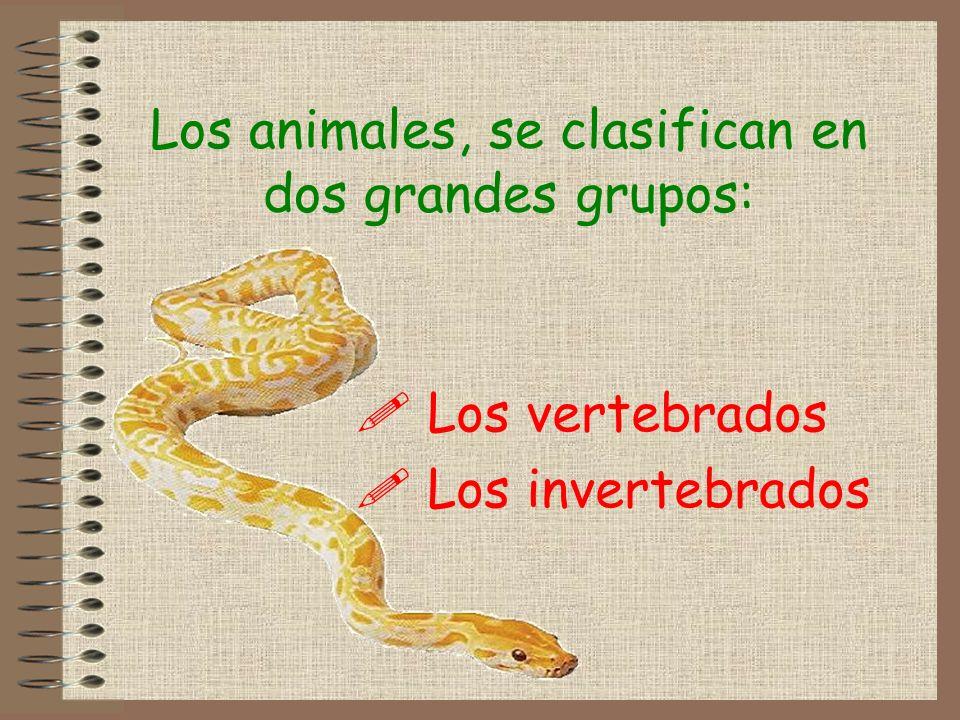 Clasificación de los invertebrados Dentro de los invertebrados hay animales muy diferentes, clasificándose en función de sus características: .