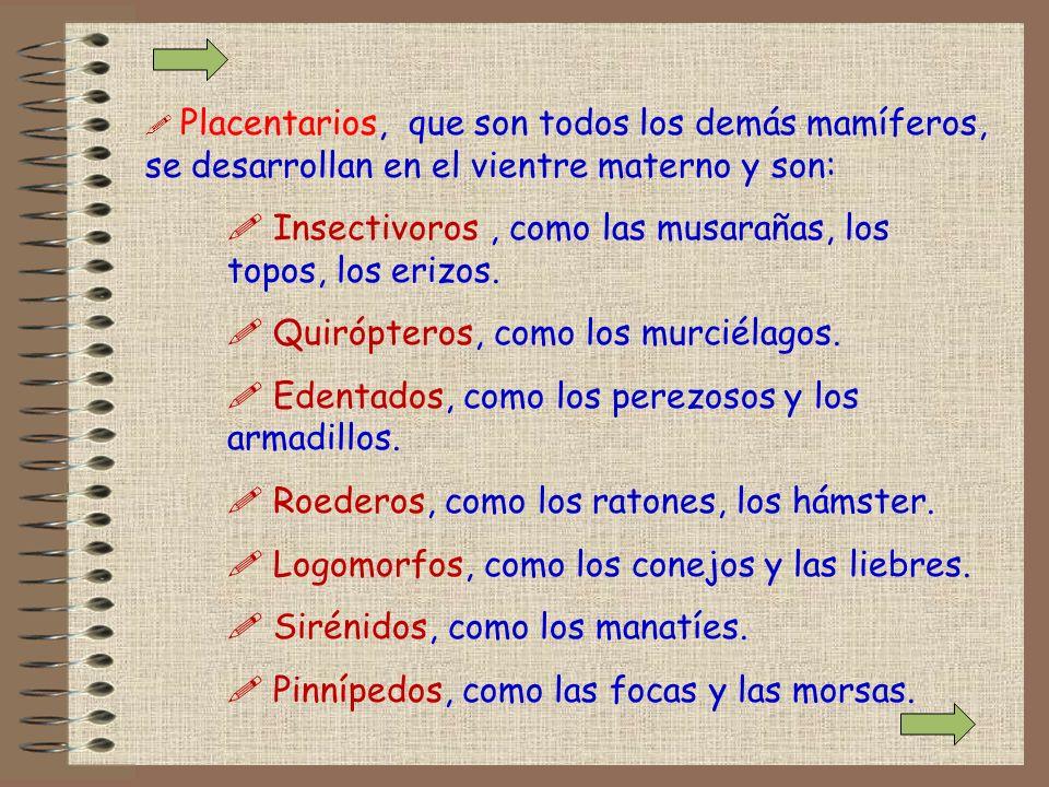 ! Placentarios, que son todos los demás mamíferos, se desarrollan en el vientre materno y son: ! Insectivoros, como las musarañas, los topos, los eriz
