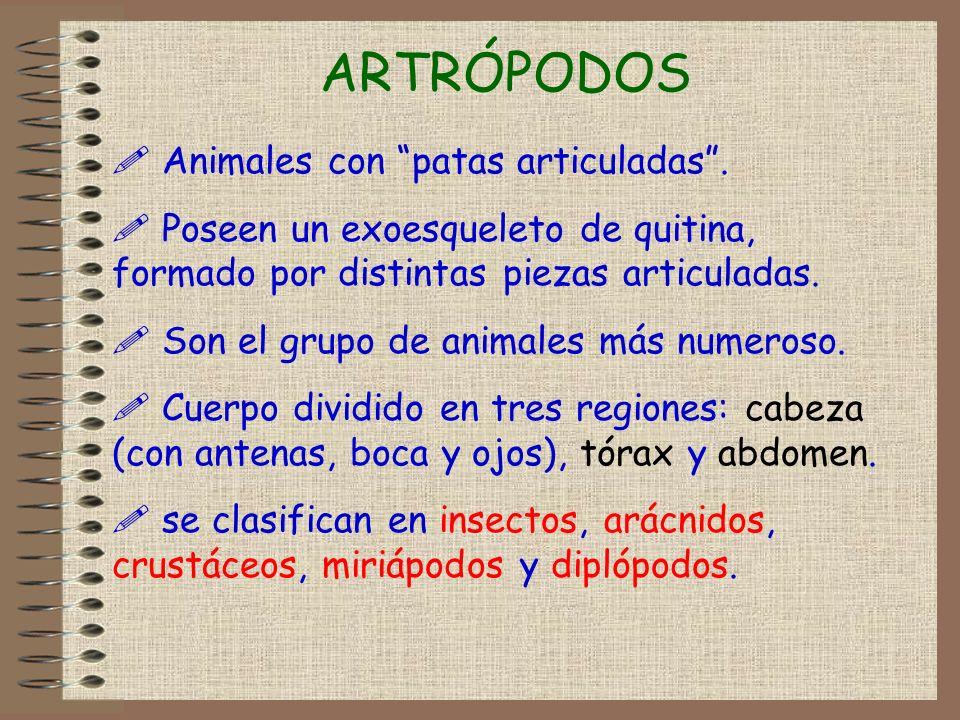 ARTRÓPODOS ! Animales con patas articuladas. ! Poseen un exoesqueleto de quitina, formado por distintas piezas articuladas. ! Son el grupo de animales