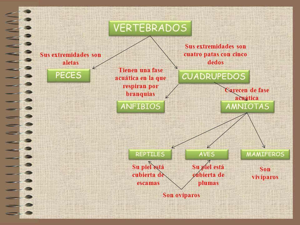 Algunos órdenes de insectos Hemíptero: chinche de campoDermáptero: tijereta Efemenópteros: efímeraIsópteros: termitas