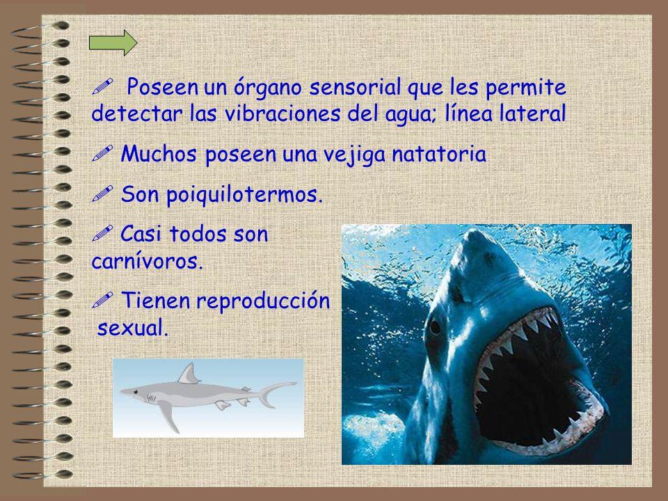 Los peces se clasifican en : .