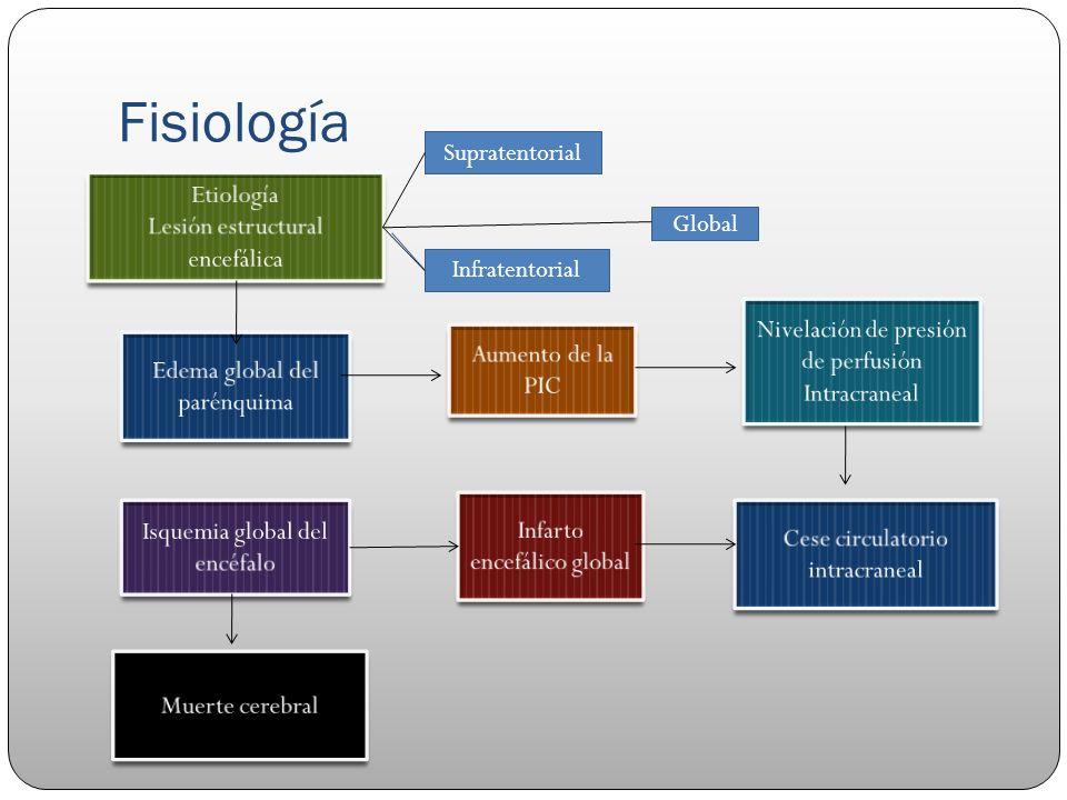 Fisiología Supratentorial Infratentorial Global