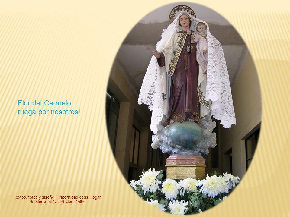 Flor del Carmelo, ruega por nosotros! Textos, fotos y diseño: Fraternidad ocds Hogar de María, Viña del Mar, Chile