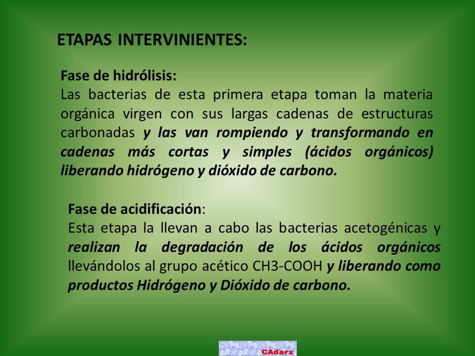 ETAPAS INTERVINIENTES: Fase de hidrólisis: Las bacterias de esta primera etapa toman la materia orgánica virgen con sus largas cadenas de estructuras