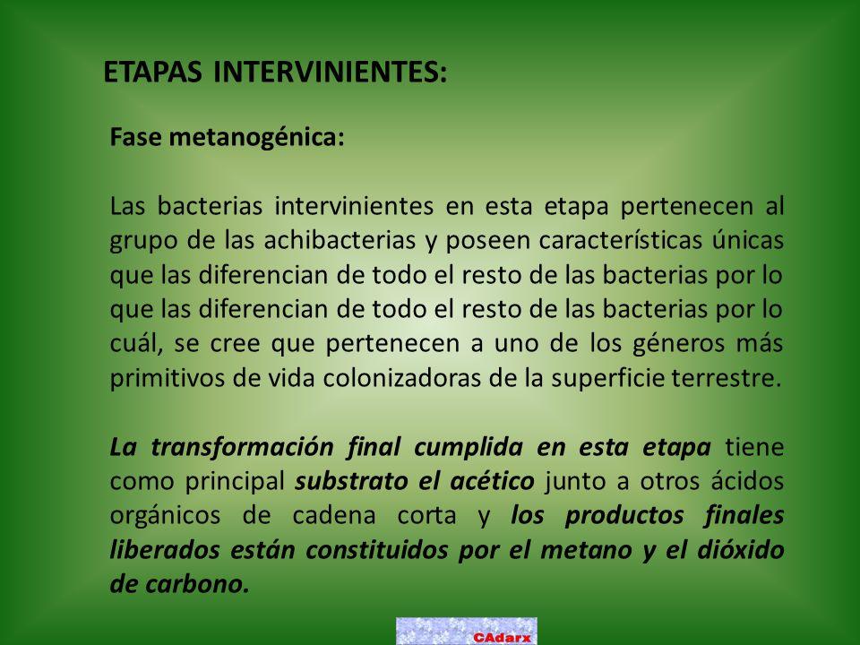 ETAPAS INTERVINIENTES: Fase metanogénica: Las bacterias intervinientes en esta etapa pertenecen al grupo de las achibacterias y poseen características