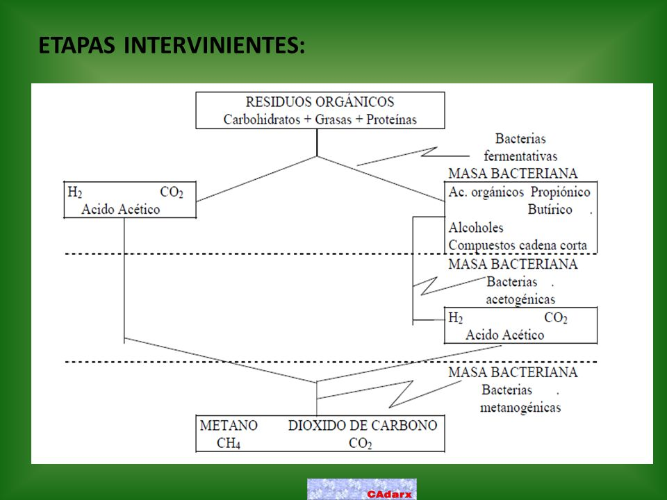 ETAPAS INTERVINIENTES: