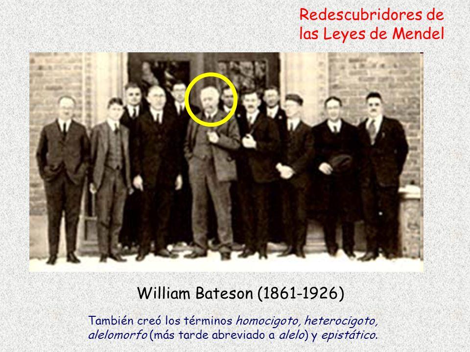 William Bateson (1861-1926) Redescubridores de las Leyes de Mendel También creó los términos homocigoto, heterocigoto, alelomorfo (más tarde abreviado