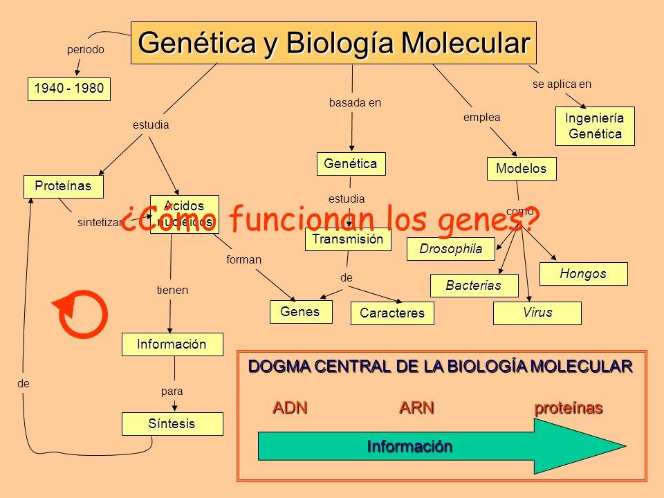 basada en Genética Genética y Biología Molecular Genes de Caracteres Transmisión estudia tienen Información como Drosophila emplea Modelos Bacterias V