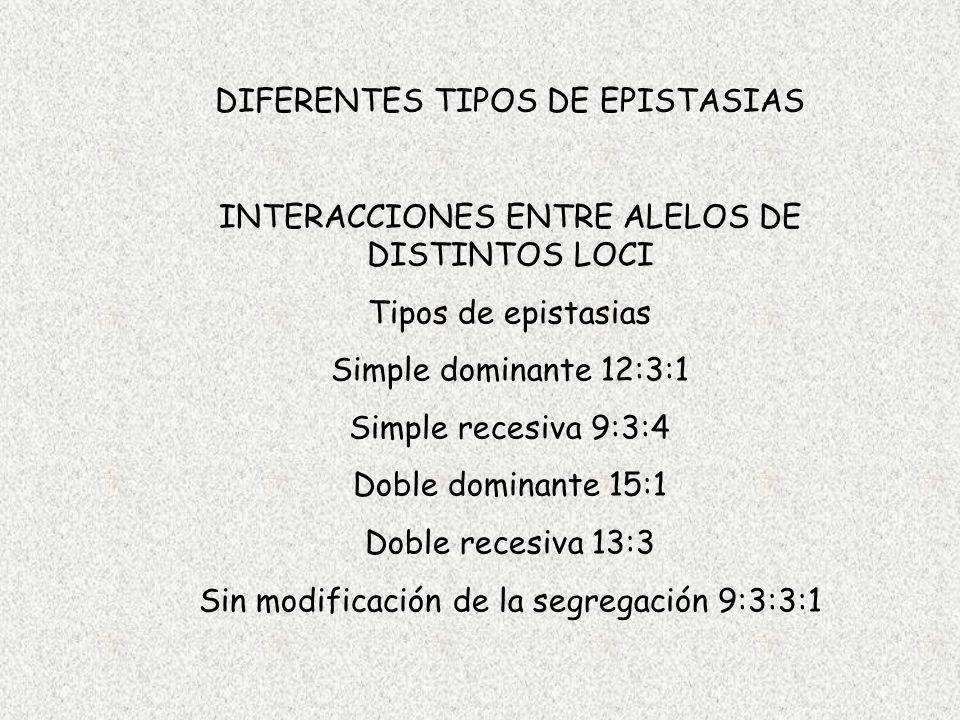 DIFERENTES TIPOS DE EPISTASIAS INTERACCIONES ENTRE ALELOS DE DISTINTOS LOCI Tipos de epistasias Simple dominante 12:3:1 Simple recesiva 9:3:4 Doble do