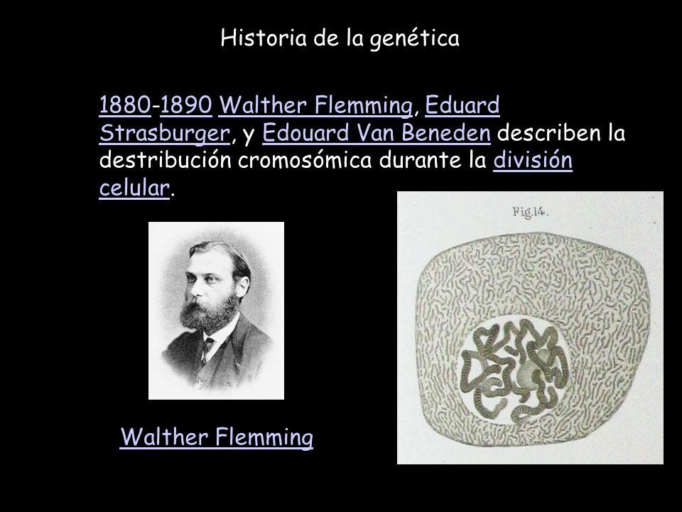 Historia de la genética 18801880-1890 Walther Flemming, Eduard Strasburger, y Edouard Van Beneden describen la destribución cromosómica durante la div