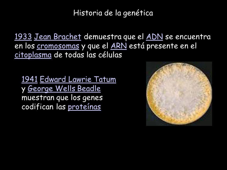 Historia de la genética 19331933 Jean Brachet demuestra que el ADN se encuentra en los cromosomas y que el ARN está presente en el citoplasma de todas