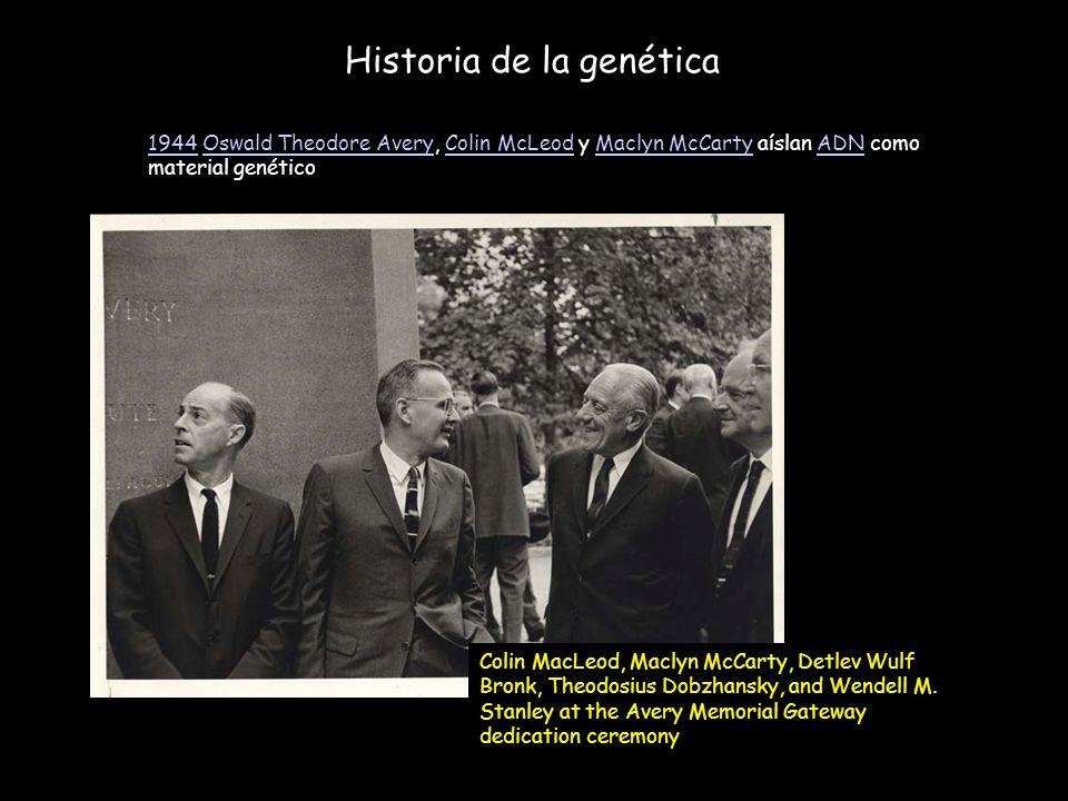 Historia de la genética 19441944 Oswald Theodore Avery, Colin McLeod y Maclyn McCarty aíslan ADN como material genéticoOswald Theodore AveryColin McLe