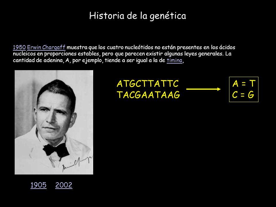 Historia de la genética 19501950 Erwin Chargaff muestra que los cuatro nucleótidos no están presentes en los ácidos nucleicos en proporciones estables