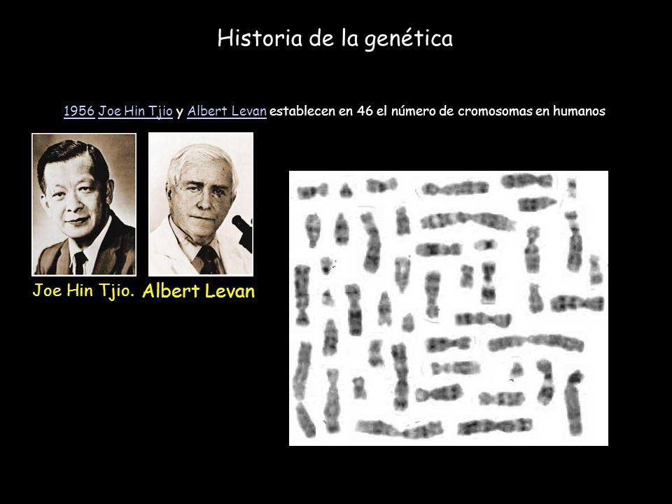 Historia de la genética 19561956 Joe Hin Tjio y Albert Levan establecen en 46 el número de cromosomas en humanosJoe Hin TjioAlbert Levan Joe Hin Tjio.