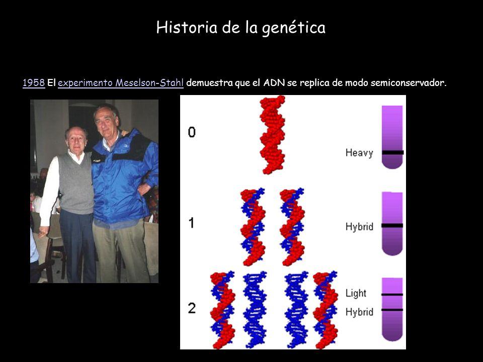 Historia de la genética 19581958 El experimento Meselson-Stahl demuestra que el ADN se replica de modo semiconservador.experimento Meselson-Stahl